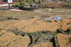 Szenische Ansicht von den Arbeitskräften, die Reis-Paddys, Bhutan ernten Lizenzfreie Stockbilder