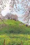 Szenische Ansicht von schönen Kirschblütenbäumen auf einem Gipfel von grünen grasartigen Wiesen unter blauem sonnigem Himmel in S Stockfoto