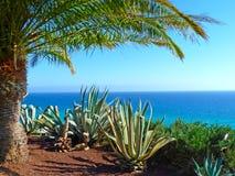 Szenische Ansicht zum Ozean mit Palmen Lizenzfreies Stockfoto