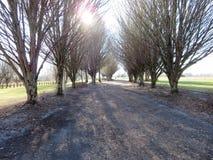 Szenische Ansichtfallbäume Stockbilder