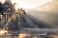 Szenische Ansichtkiefern-Waldtouristen, die mit Schwan auf Reservoir kampieren Stockfotos