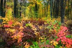 Szenische Herbstzeit lizenzfreies stockfoto