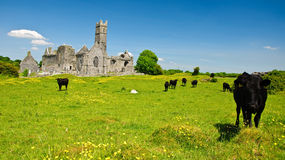 Szenische irische alte Kircheabtei ruiniert Landschaft Stockbild