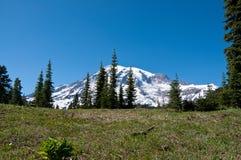Szenische Landschaft des Mount Rainier stockfotografie