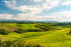 Szenische Landschaft mit grünen Hügeln, Baum und gelben Blumen in FO Stockfoto