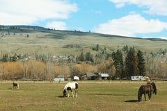 Szenische Landschaft mit Pferden auf Ackerland Stockfotos