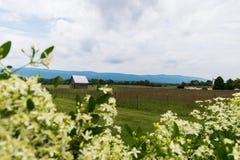 Szenische Landschaft von Elkton, Virginia um Shenandoah-Staatsangehörigen Stockfotografie