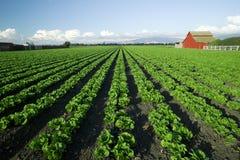 Szenische Landwirtschaft Stockbild
