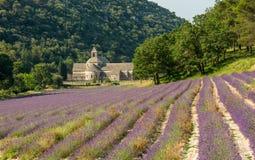Szenische Senanque-Abtei und blühendes Lavendelfeld in Provence-Region von Frankreich Lizenzfreie Stockfotos
