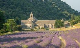 Szenische Senanque-Abtei und blühendes Lavendelfeld in Provence-Region von Frankreich Stockfotografie