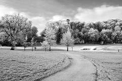 Szenische Sicherung des Winters des Waldwegs in Irland Lizenzfreie Stockfotos