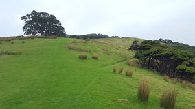 Szenische Stadt Neuseelands Stockbilder