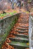 Szenische Steintreppe unter rostigem Farblaub Stockfotografie