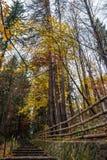 Szenische Steintreppe unter rostigem Farblaub Lizenzfreies Stockfoto