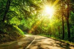 Szenische Straße in einem Wald Lizenzfreies Stockbild