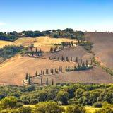 Szenische Straße Zypresse-Baums in Pienza nahe Siena, Toskana, Italien. Lizenzfreie Stockbilder