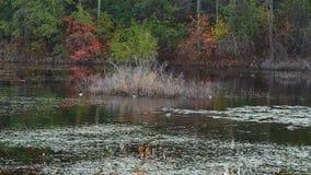 Szenische Sumpfgebietwild lebende tiere Lizenzfreie Stockfotos