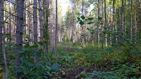 Szenische Sumpfgebietwild lebende tiere Lizenzfreie Stockbilder