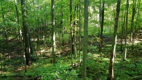 Szenische Sumpfgebietwild lebende tiere lizenzfreies stockfoto