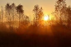 Szenische und zarte Landschaft mit Sonnenaufgang stockbild