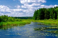 Szenische Wisconsin-Wildnis Stockbild