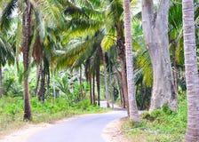 Szenischer Asphalt Concrete Road durch Palmen, Kokosnuss-Bäume und Grün - Neil Island, Andaman, Indien lizenzfreie stockbilder