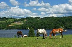 Szenischer Pferden-Bauernhof Lizenzfreie Stockbilder