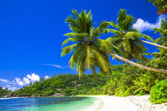 szenischer Strand mit Kokosnusspalmen Stockfotos