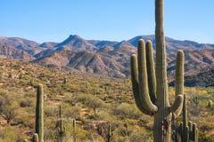 Szenischer und historischer Bergblick an Apache-Spur Arizona, Kaktuslandschaftsrotfelsformationen lizenzfreie stockfotos