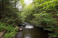 Szenischer Wasserfall in Ricketts Glen State Park im Poconos in P Lizenzfreie Stockfotografie