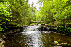 Szenischer Wasserfall in Ricketts Glen State Park im Poconos in P stockfoto