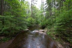 Szenischer Wasserfall in Ricketts Glen State Park im Poconos in P lizenzfreie stockfotos