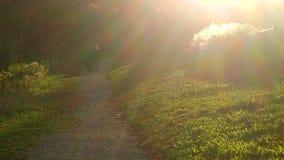 Szenischer Weg während des Herbstes Stockbilder