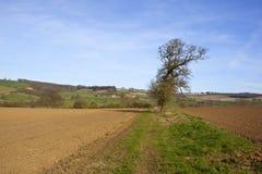 Szenisches Ackerland in Yorkshire Lizenzfreies Stockbild