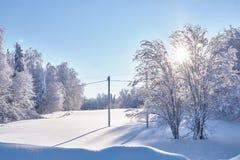 Szenisches Bild der schneebedeckten Tanne im schönen Wetter Kalter Tag, ruhige Winterszene im Wald das Konzept von Tourismus glüc stockbilder