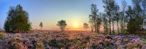 Szenisches Bild des Sonnenaufgangs über blühendem rosa Heidemoor Stockfotos