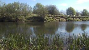 Szenisches Fluss nr Crookham, Northumberland Großbritannien stock video footage