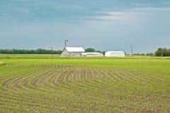Szenisches Frühlings-Getreidefeld Stockbilder