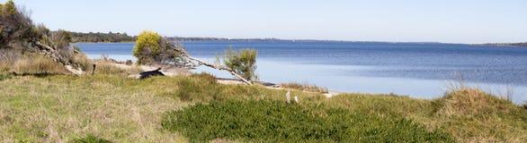 Szenisches Panorama vom walkpath entlang der Leschenault-Mündung Bunbury West-Australien lizenzfreie stockbilder