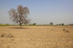 Szenisches Rajasthan Stockbilder