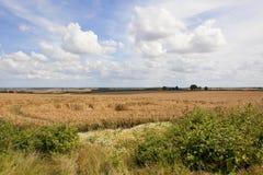 Szenisches Weizenfeld und Wildflowers Lizenzfreie Stockfotografie