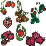 szereg ilustracyjne owocowe royalty ilustracja