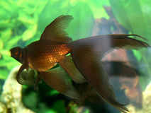 szereg ryb zdjęcia royalty free