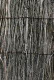 szermiercza willow Zdjęcia Royalty Free