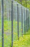 Szermierczy stalowy siatki i metalu drymby ogrodzenie Obrazy Royalty Free