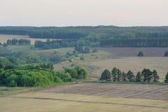 Szerocy pola i zieleni drzewa w lecie po zmierzchu Obrazy Stock