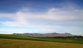 Szerocy zieleni winnicy fotografia royalty free