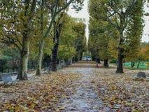Szeroka aleja w jesieni w Jardin des Plantes, Paryż, Francja zdjęcia royalty free