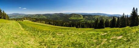 Szeroka wiosny panorama zielona halizna i lasy r na halnych skłonach Obraz Stock