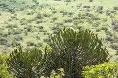 Szeroki i zielony krajobrazowy widok Kruger park narodowy Obraz Stock